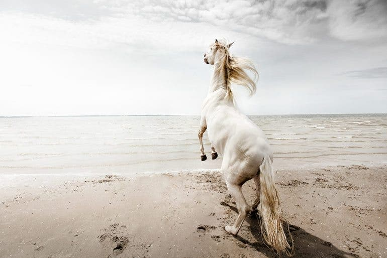 clairedroppert-horse-8