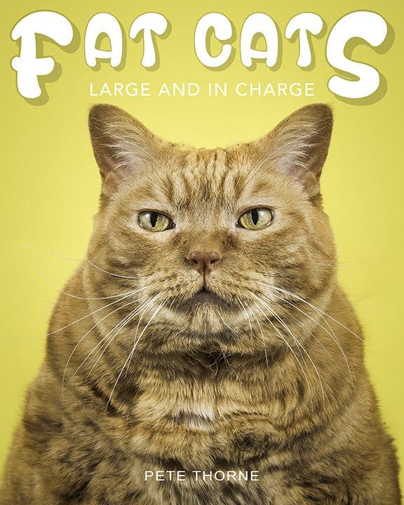 fat-cats-cover-web