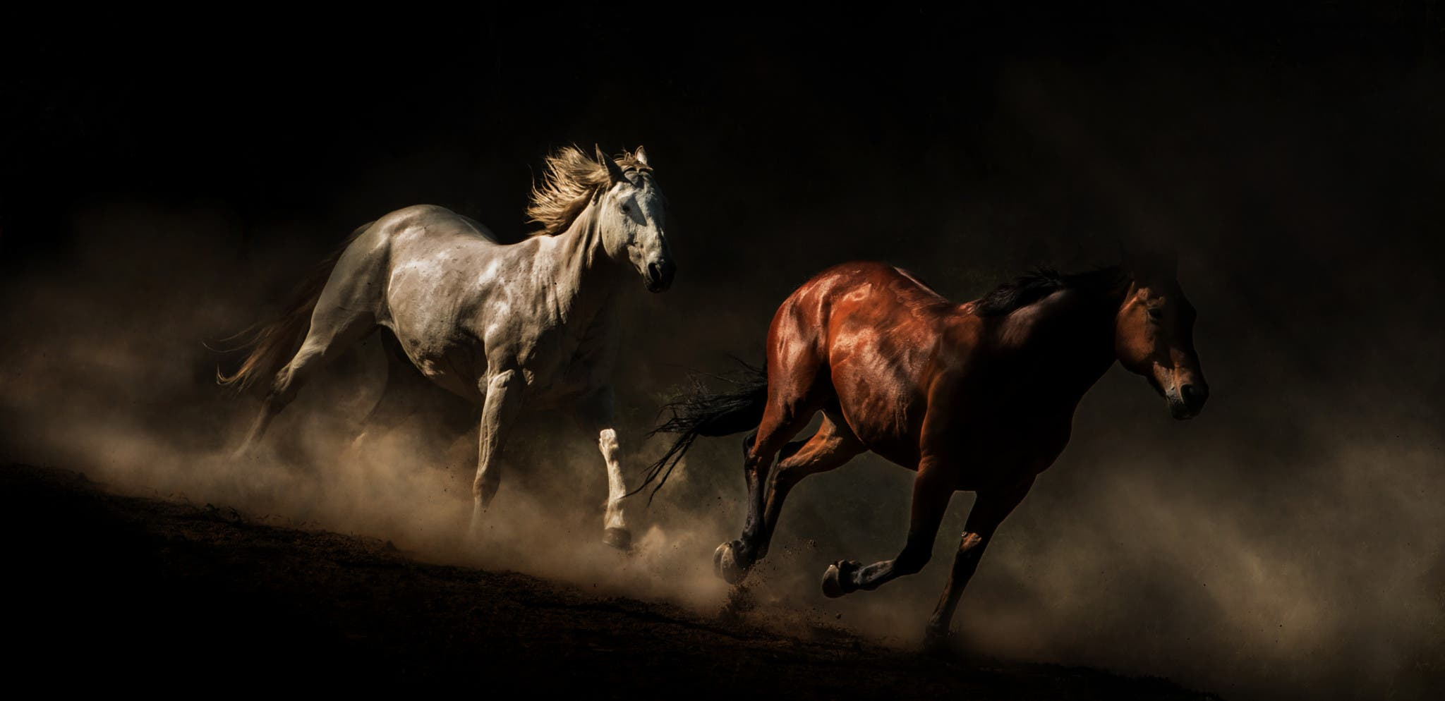 Ryan Courson Magical Portrait Photographs Of Horses