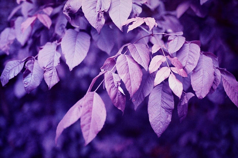 Lomography LomoChrome Purple Now Comes in 110 Format