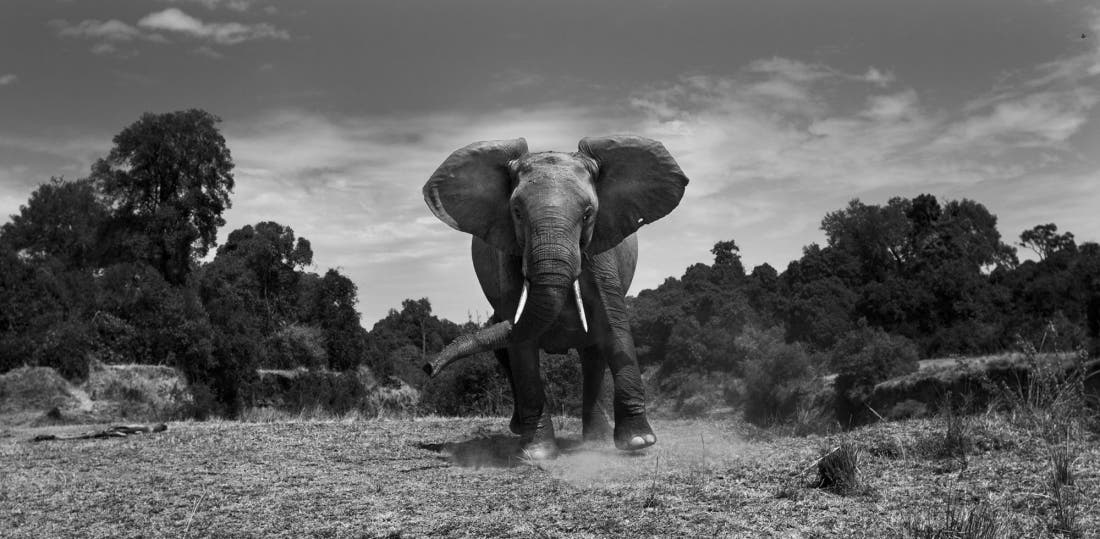 Anup shah the mara black white series of the year 2017