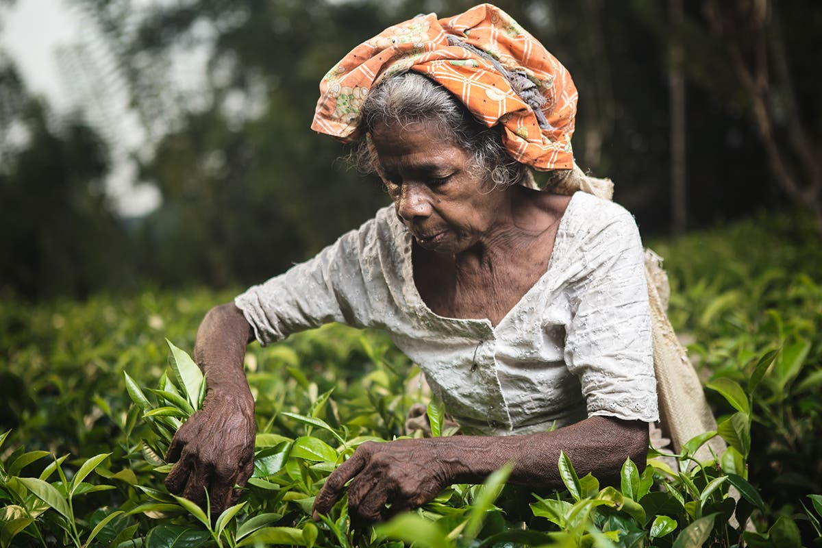 Giacomo Bruno Beautifully Documents Tea Picking in Sri Lanka