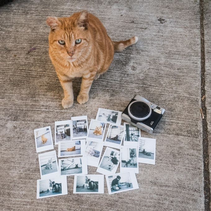 This Kickstarter Promises Backers the Puurrrrfect Instax Photo of a Hoodcat
