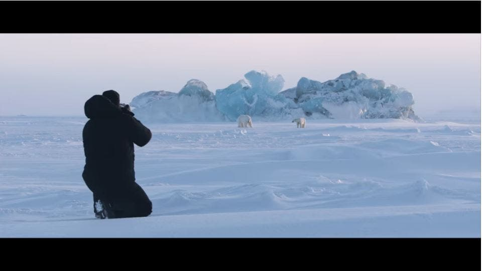 National Geographic Short Film Shows How to Document Polar Bears in the Wild