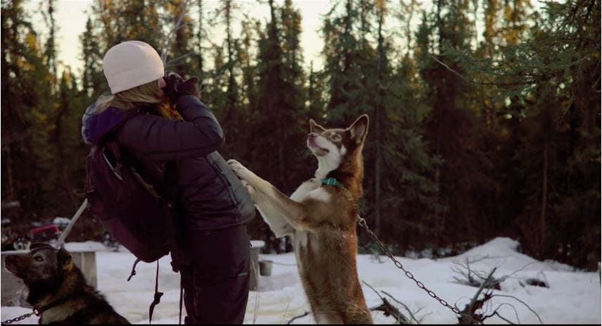Watch Photojournalist Katie Orlinsky Get Her Spark Back Through Dog Sledding