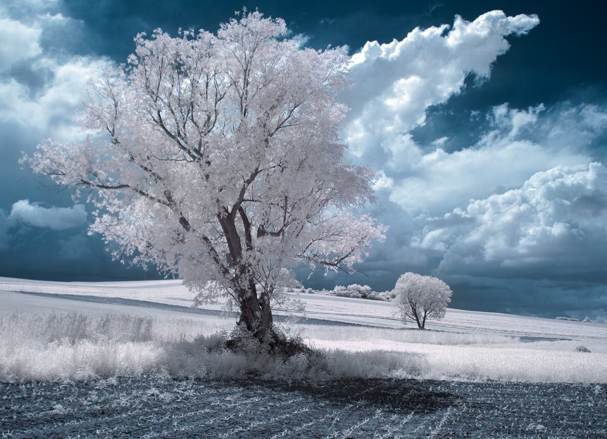 Przemyslaw Kruk Showcases the Surreal Beauty of Infrared Photography