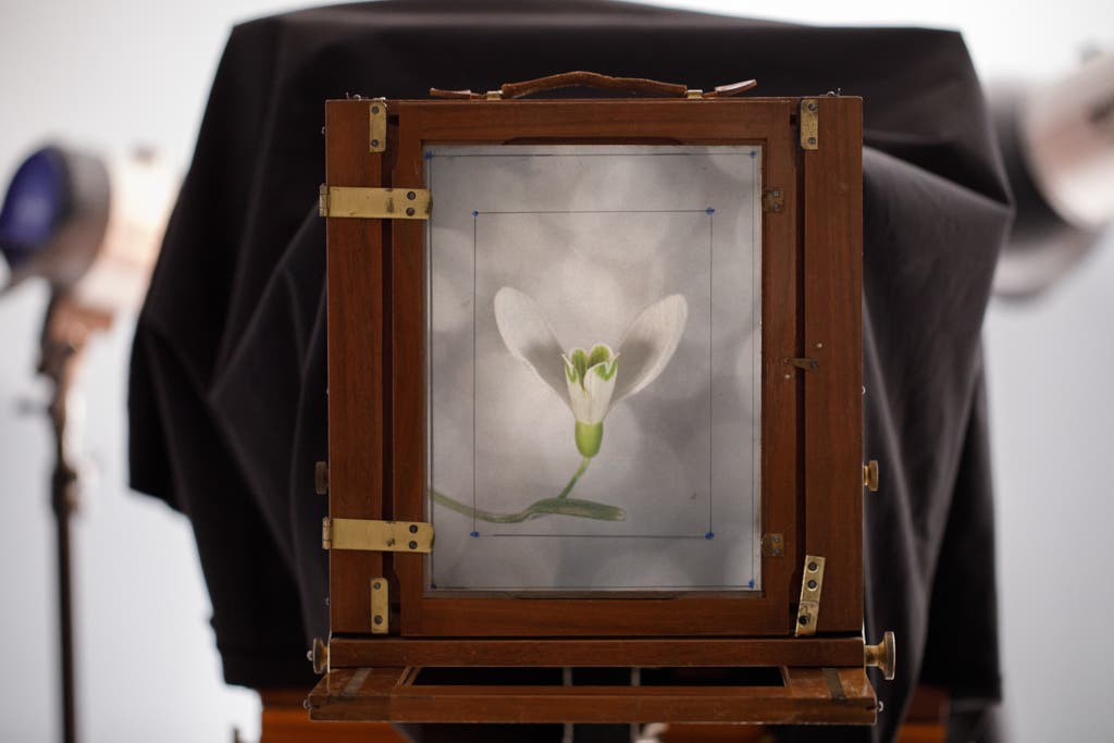 Markus Hofstaetter Does Macro Photography Using Two Wet Plate Cameras