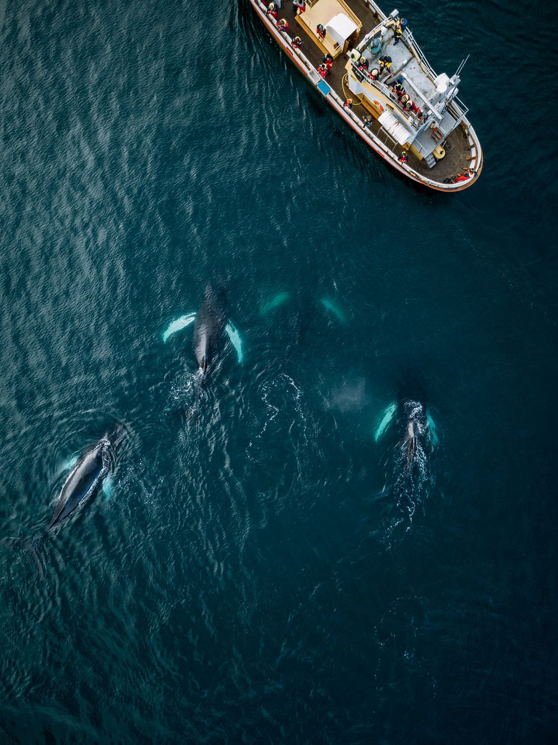 Michael Schauer Shares a Whale Watching Story with Gorgeous Aerial Photos