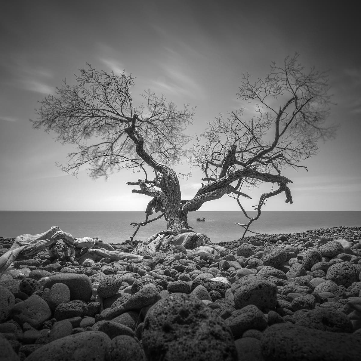 Daniel Tjongari's Black and White Photos of Lone Mangroves Will Put You in Awe