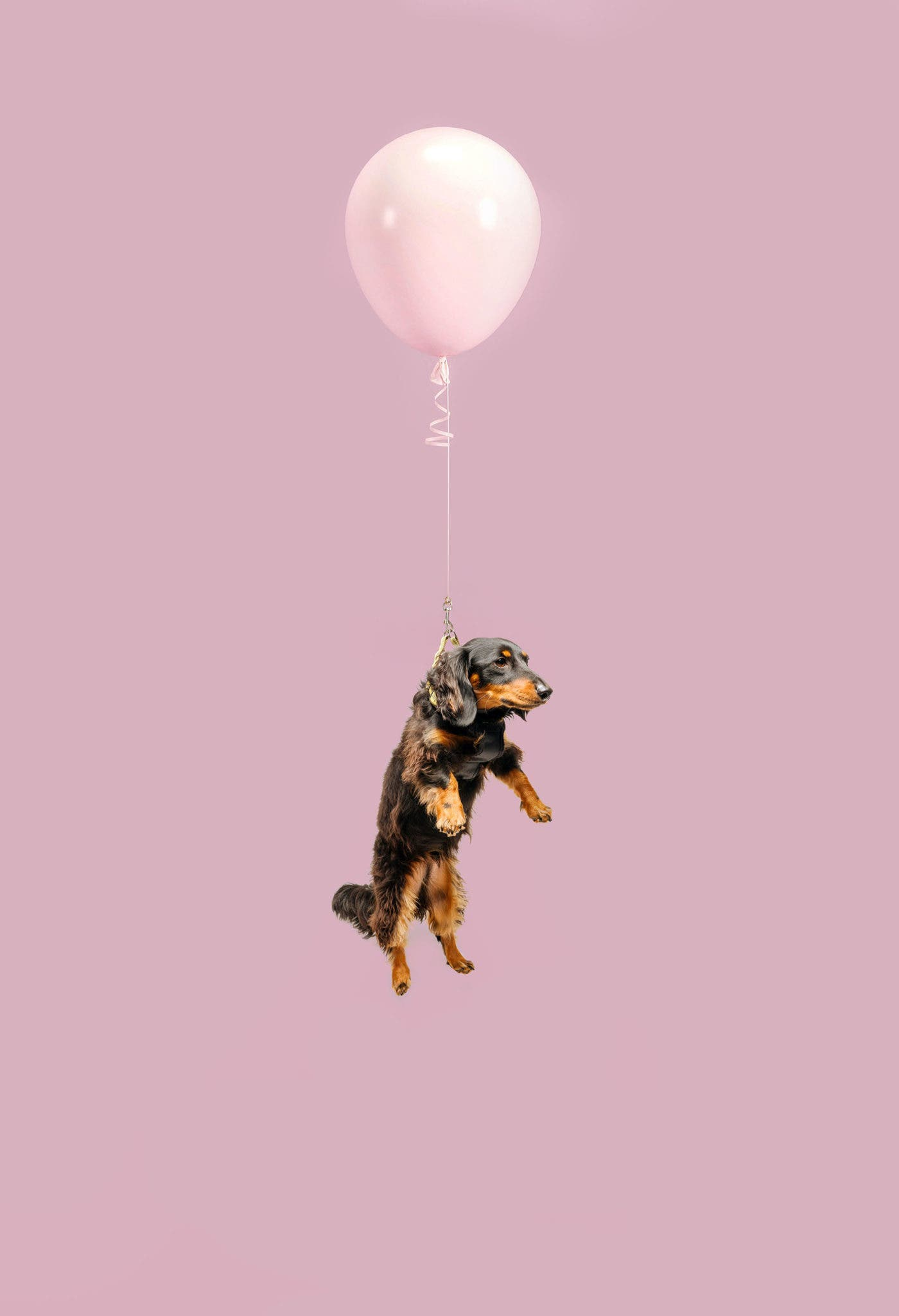 "Ian Pettigrew Aims for Smiles With His ""Floating Dogs"" Project"