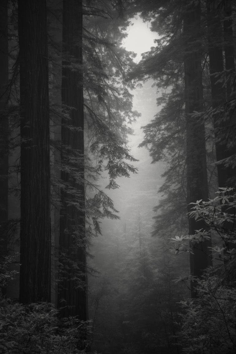 Nathan Wirth's Infrared Sony a7r to Get These Spooky Redwood Photos