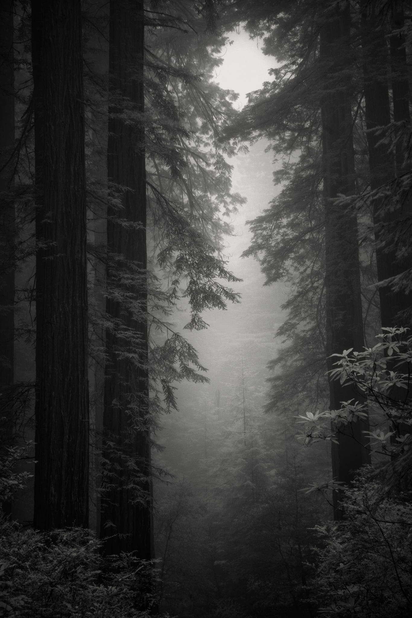 Nathan Wirth Used an Infrared Sony a7r to Get These Spooky Redwood Photos