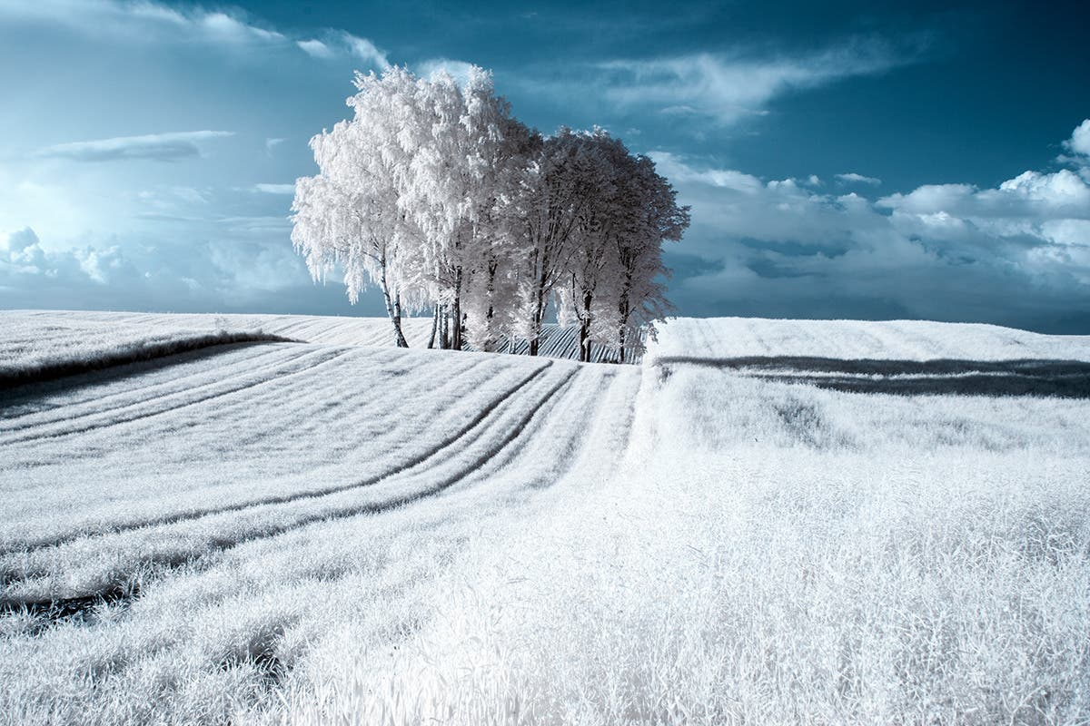 Przemyslaw Kruk Used Infrared Photography to Capture These Haunting Landscapes