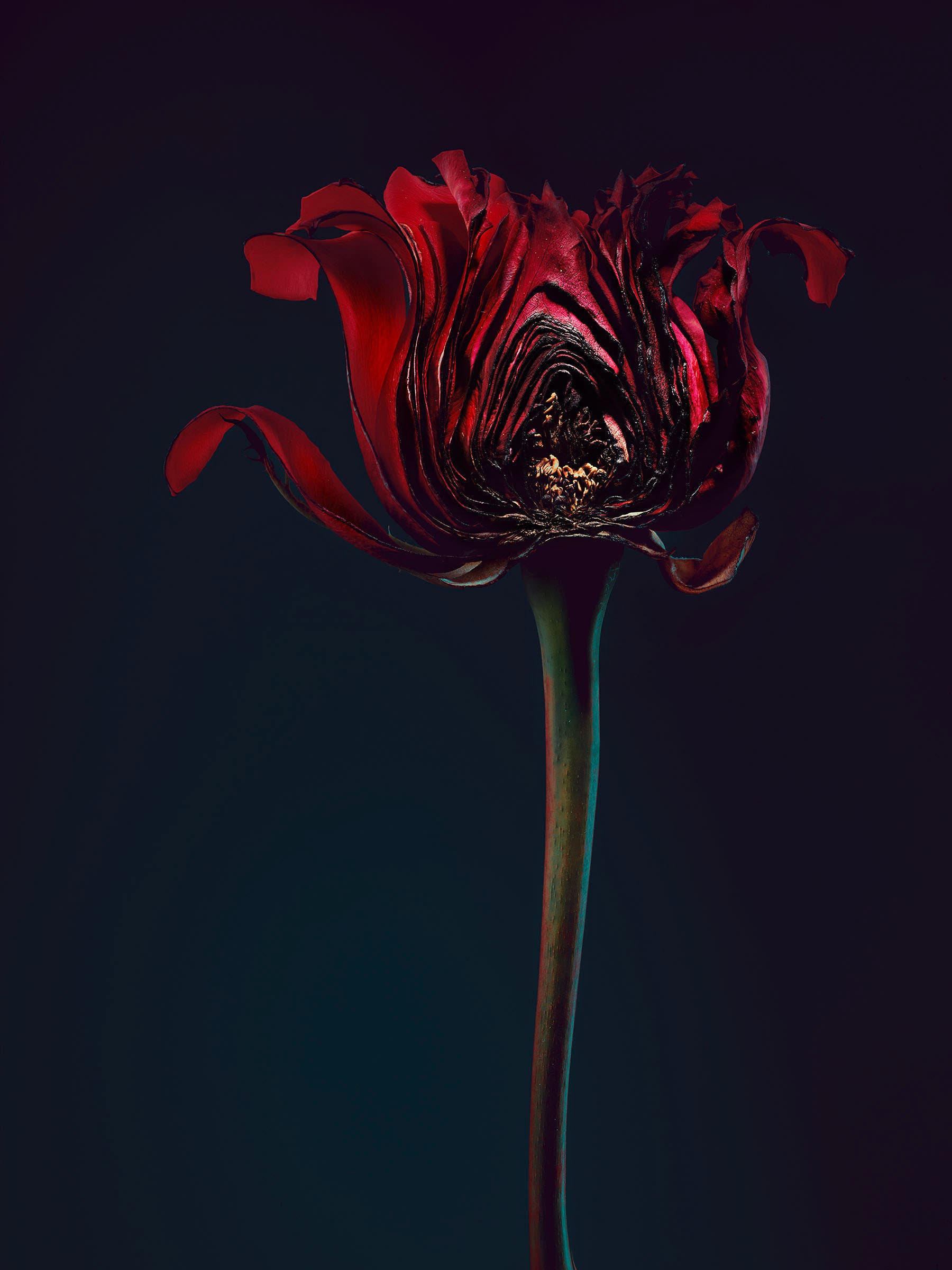 "Simon Puschmann Uses Powerful Flower Analogy Inspired by ""Me Too"" Campaign"