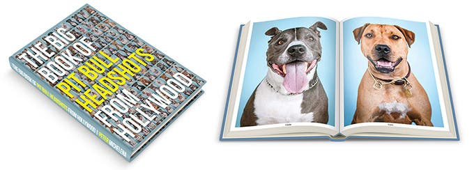 This Big Book of Pit Bull Headshots from Hollywood is So Heartwarming