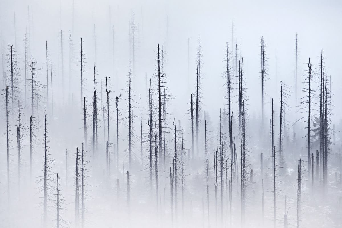 Kilian Schönberger Explores the Ghostly Imagery of Spruce Forests
