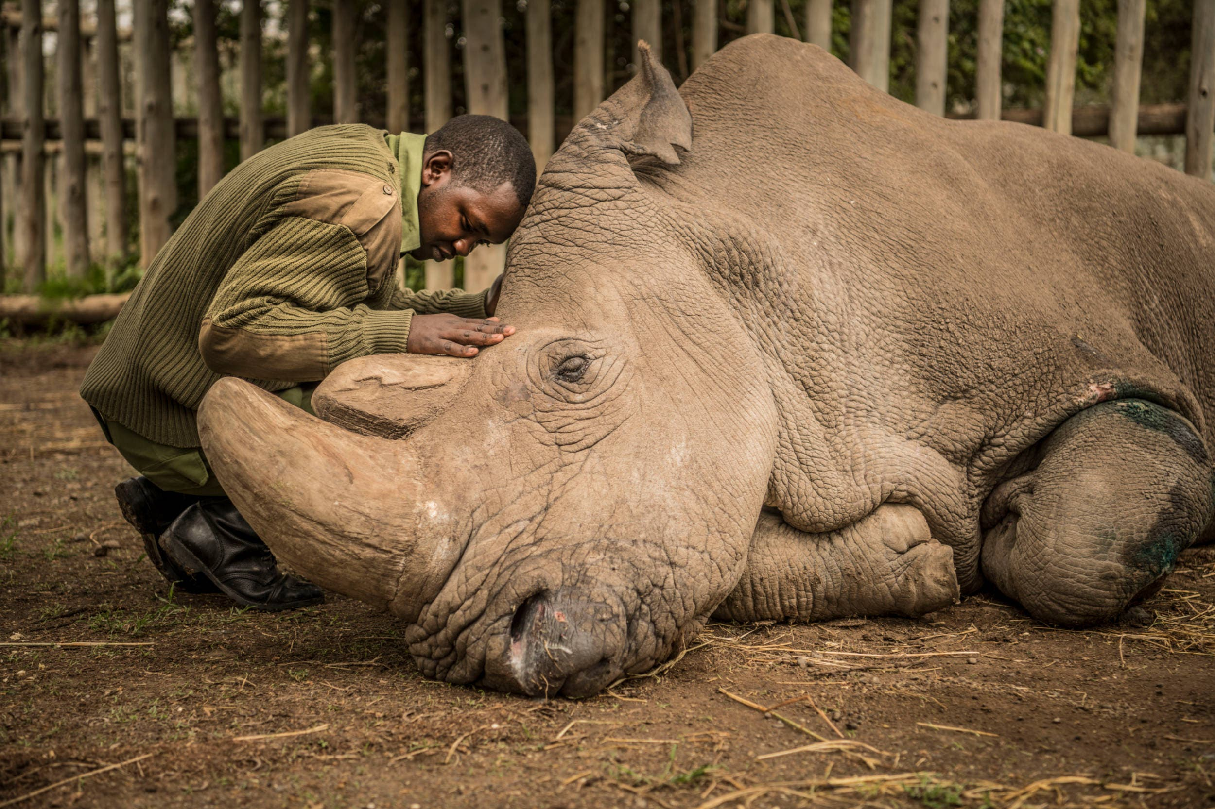 Nat Geo Photographer Ami Vitale on Photographing the Last White Rhinos