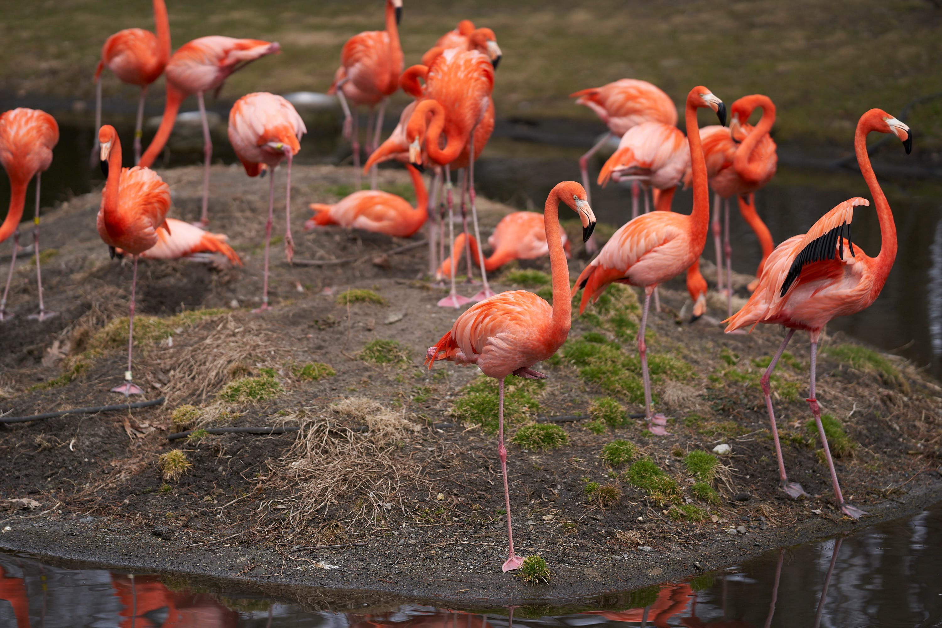 Photography Cheat Sheet: Photographing Flocks of Birds