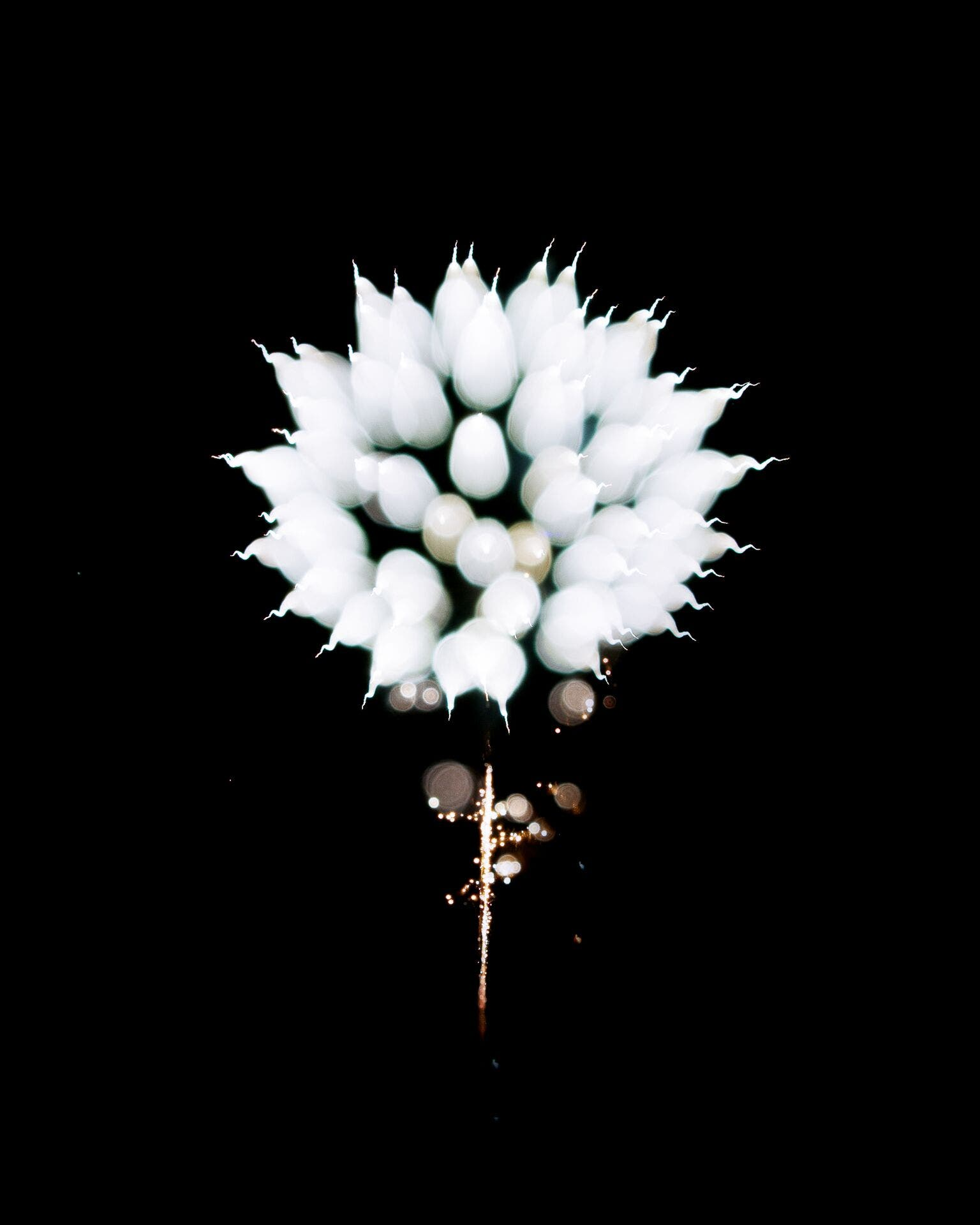 Fireworks or Flower? Charlie Sin's Beautiful Photos Will Mesmerize
