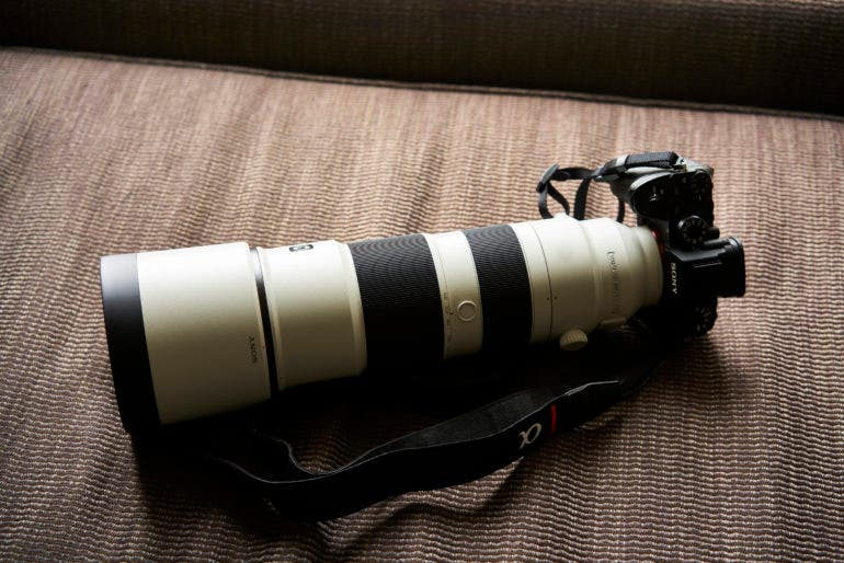 Sony 600mm f4 for wildlife photography