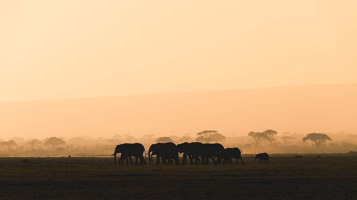 Stian Klo Captures the Majestic Wildlife of the Kenyan Landscape