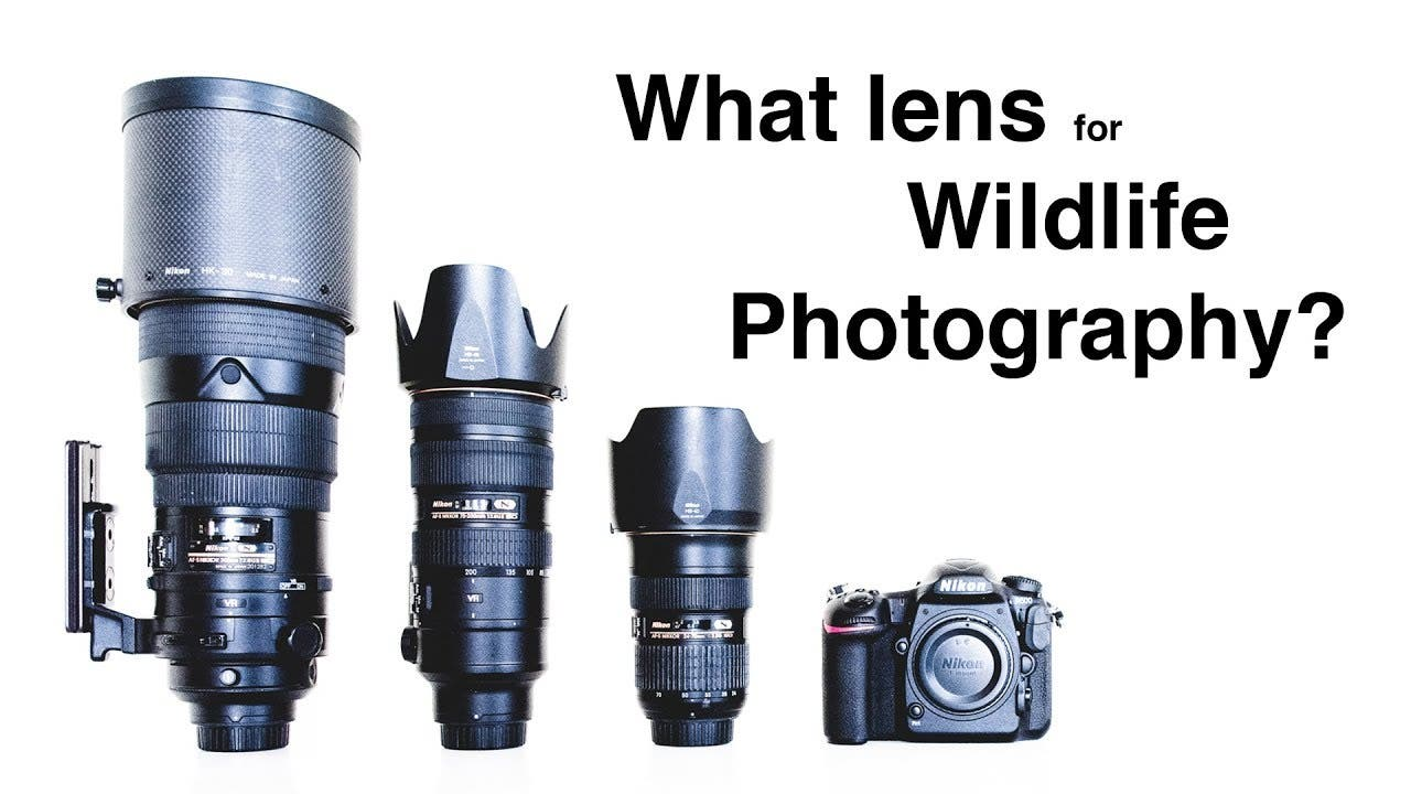 What Lenses Should You Invest in for Wildlife Photography?