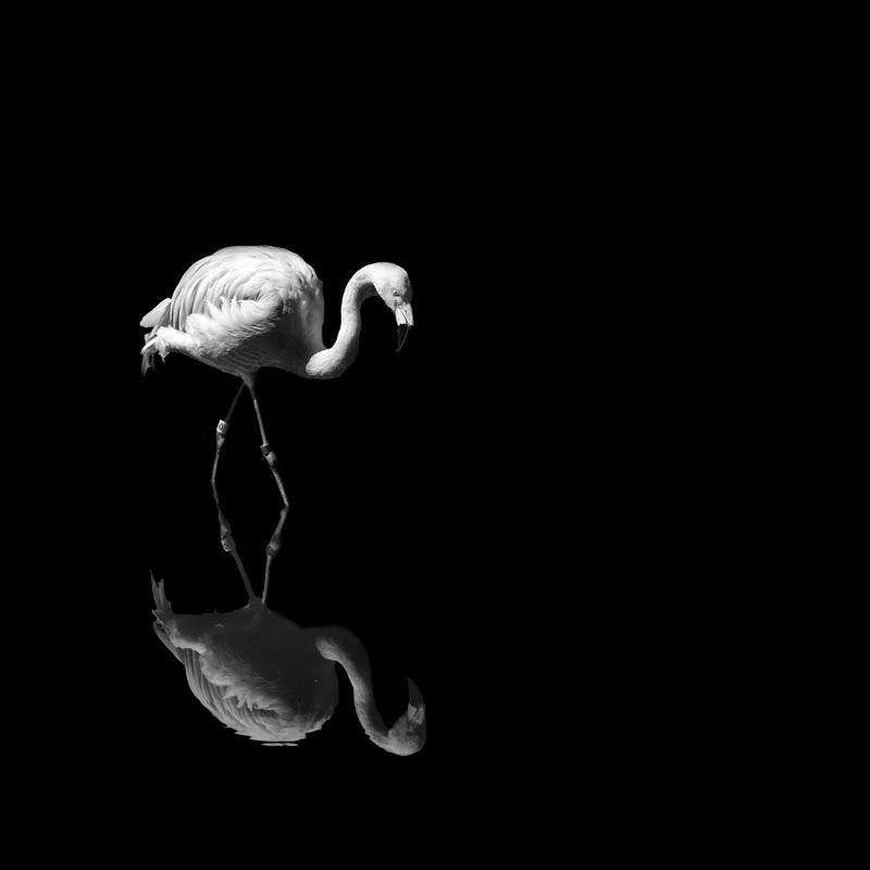 """Nathan Wirth Explores Negative Space Through the Concept of """"Ma"""""""