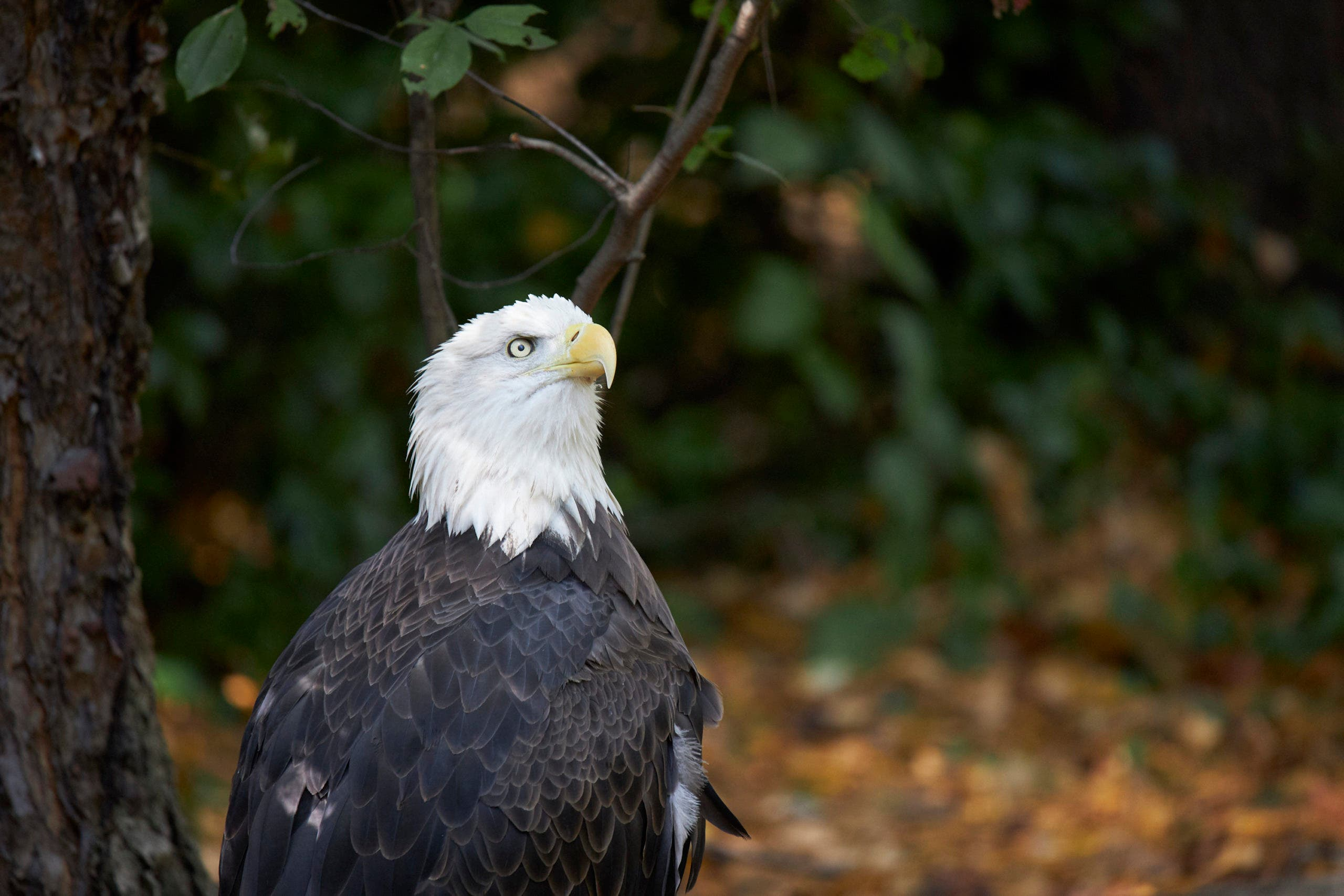 Photography Cheat Sheet: Photographing Birds at the Zoo