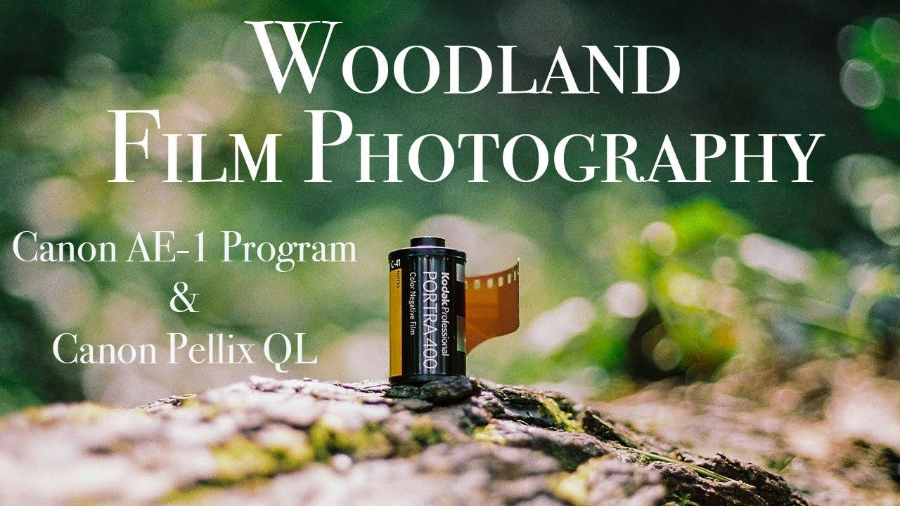Taking the Canon AE-1 Program and Pellix QL Out on a Woodland Shoot