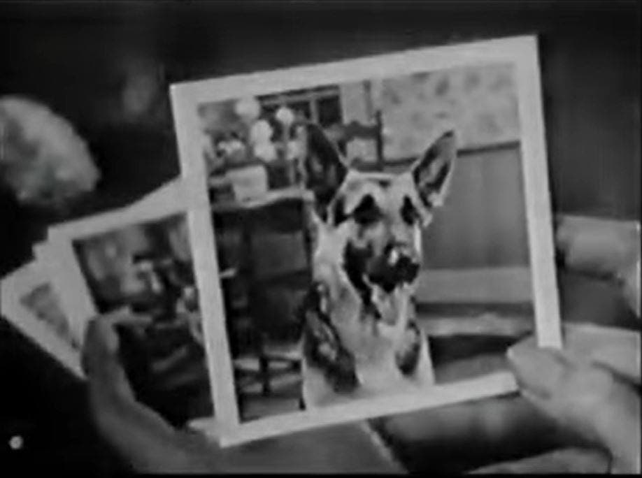 This Kodak Brownie Commercial Doubled as a Pet Portrait Tutorial