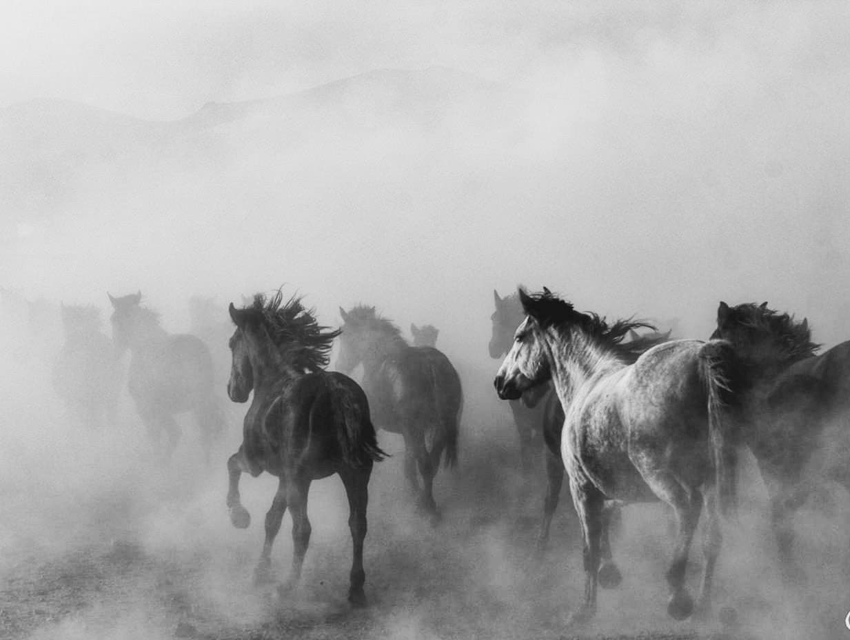 """Look in Awe at the """"Life in Black and White"""" GuruShots Contest Winners"""