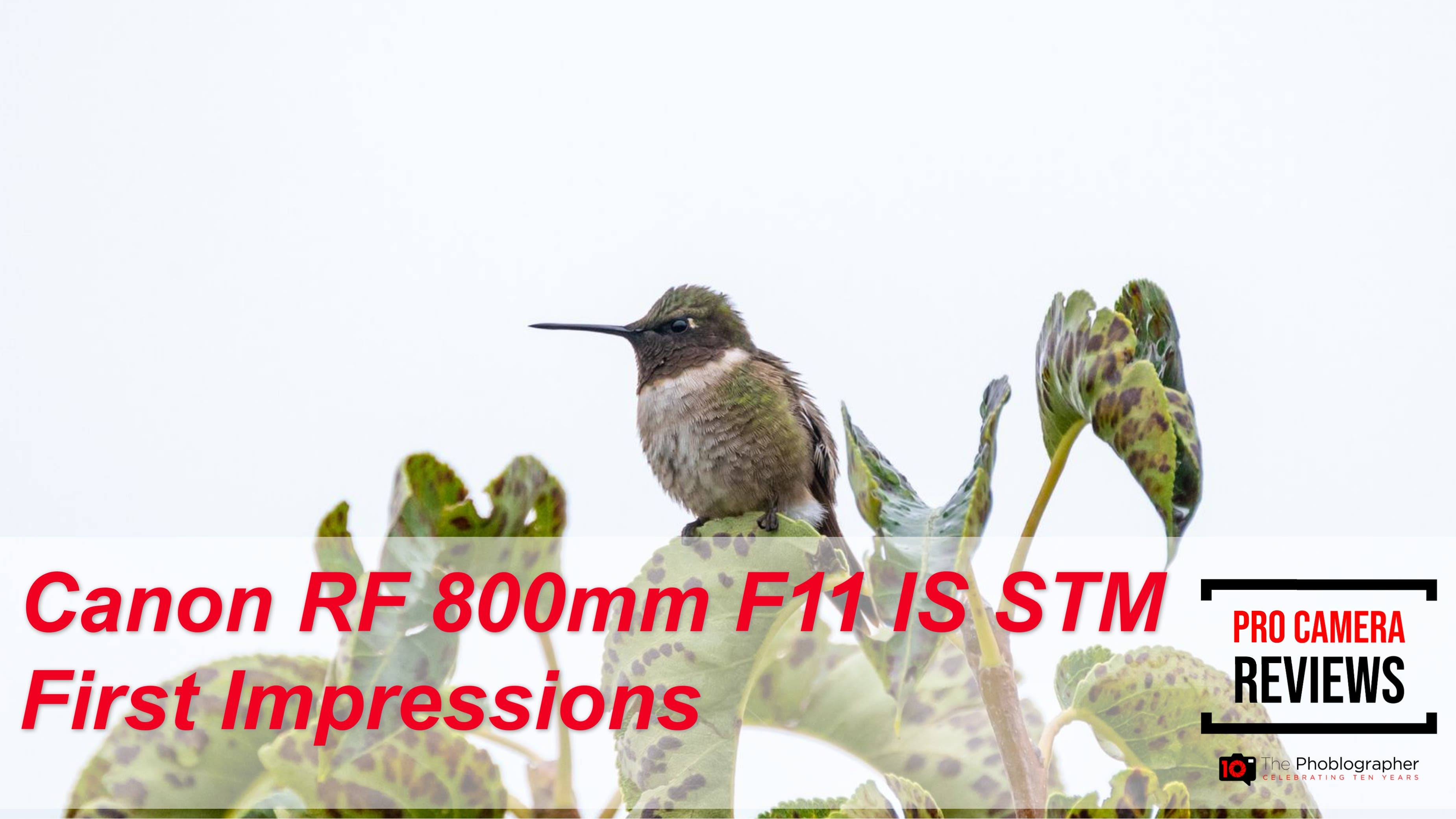Is the Canon RF 800mm F11 IS STM for Wildlife?