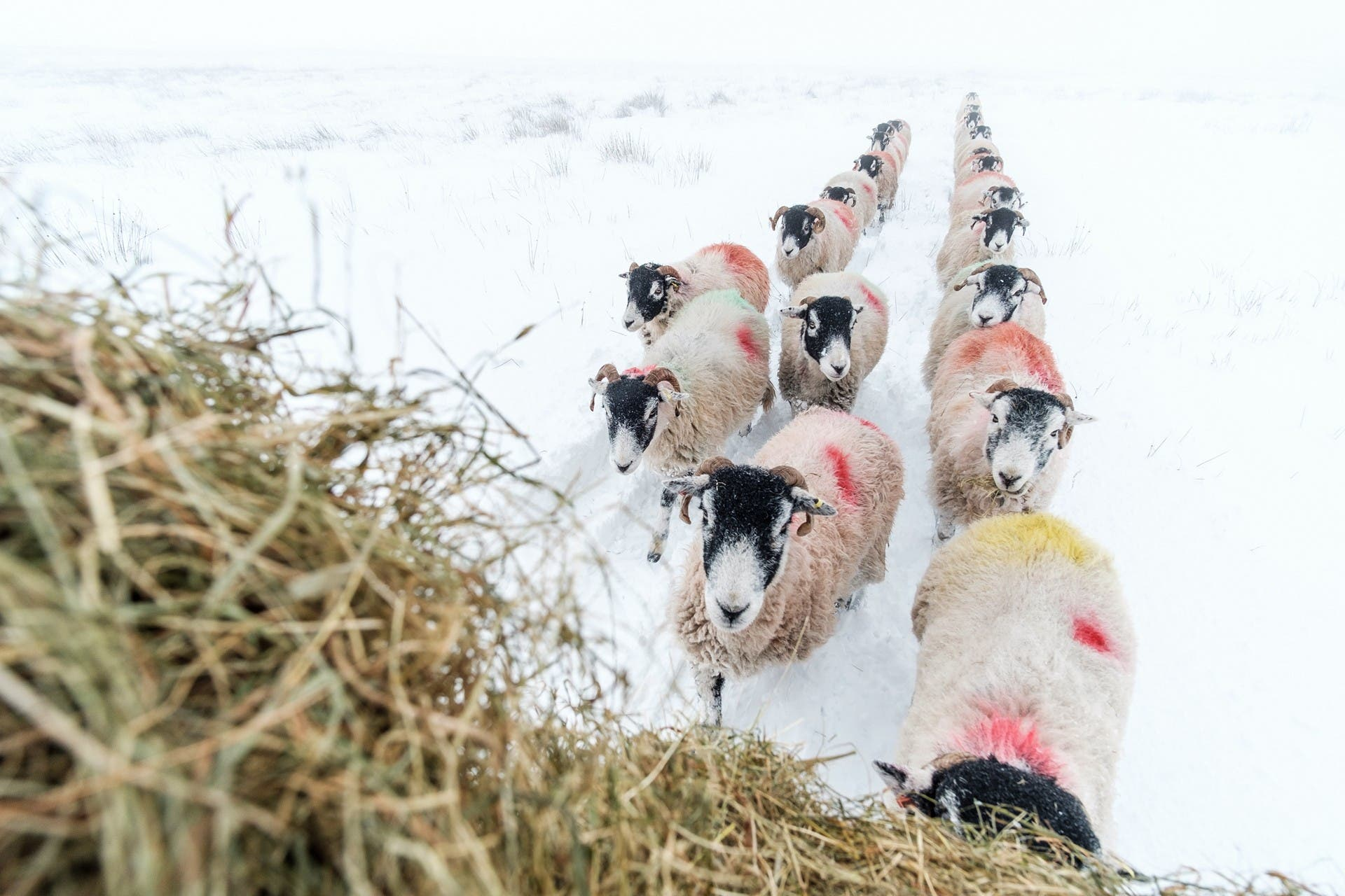Guy Carpenter Documents the Beautiful Life of Sheep With No Photoshop