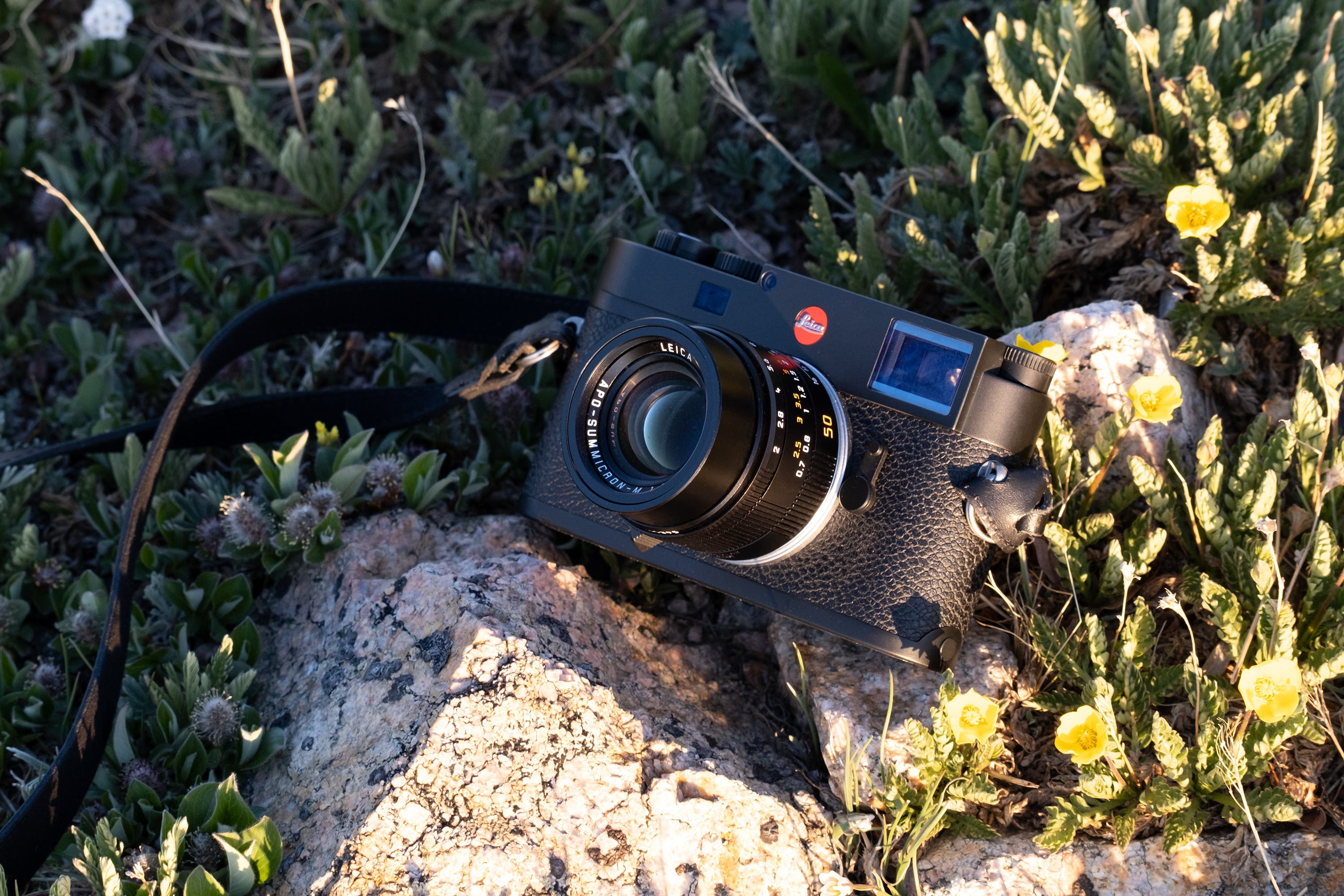 We Love It! Leica 50mm F2 Summicron APO Review